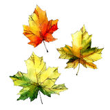 Acquerello Autumn Leaves Set Fotografia Stock