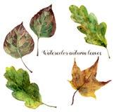 Acquerello Autumn Leaves Set Foglie dipinte a mano di caduta isolate su fondo bianco Illustrazione botanica per progettazione Fotografia Stock Libera da Diritti