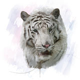 Acquerello bianco della tigre Fotografie Stock Libere da Diritti