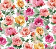 Acquerello che dipinge Rose Blossoms ed i germogli rosa su un fondo bianco Fotografie Stock Libere da Diritti