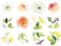Acquerello dei fiori Fotografie Stock
