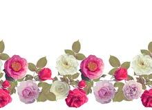 Acquerello del confine delle rose Fotografia Stock