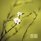 Acquerello del fiore dell'albicocca Fotografie Stock