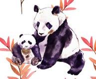 Acquerello del panda Orso di panda ed orso del bambino Immagini Stock Libere da Diritti