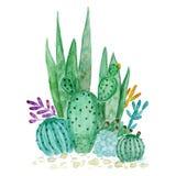 Acquerello dell'illustrazione dei succulenti del cactus illustrazione di stock