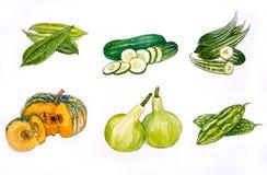 Acquerello dell'illustrazione di Vegetabl Backgronds Immagini Stock Libere da Diritti