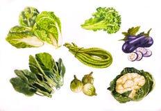 Acquerello dell'illustrazione di Vegetabl Backgronds Immagine Stock Libera da Diritti