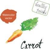 Acquerello della carota Illustrazione di Stock