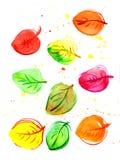 Acquerello delle foglie di autunno Immagine Stock