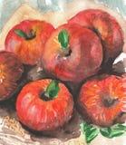 Acquerello delle mele Immagini Stock Libere da Diritti