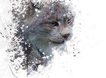 Acquerello di Canada Lynx Fotografie Stock