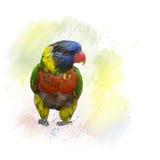 Acquerello di Lorikeet dell'arcobaleno Fotografia Stock Libera da Diritti