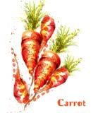 Acquerello di vettore isolato carote Illustrazioni fresche delle verdure della molla illustrazione vettoriale
