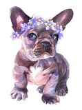 Acquerello dipinto a mano Il bulldog francese con fiori si avvolge sul suo sentito illustrazione vettoriale