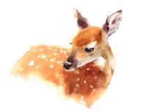 Acquerello Fawn Animal Illustration Hand Painted dei cervi del bambino Fotografie Stock Libere da Diritti