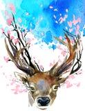 Acquerello Forest Deer e ramo rosa del fiore della molla Fotografia Stock