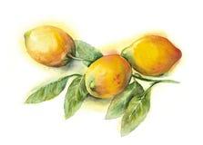 Acquerello - limoni fotografie stock libere da diritti