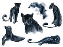 Acquerello messo con la raccolta degli animali delle pantere nere Fotografia Stock Libera da Diritti