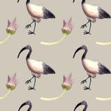 Acquerello senza cuciture del modello con l'ibis, simbolo egiziano royalty illustrazione gratis