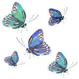Acquerello variopinto del modello di farfalle della bella molla delicata tenera meravigliosa magnifica specializzata sveglia Immagini Stock Libere da Diritti