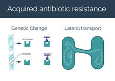 Acquired antibiotic resistance vector illustration. Stock Photos