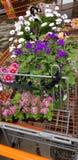 Acquistando per i fiori fotografia stock