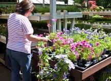 Acquistando per i fiori del giardino immagini stock libere da diritti