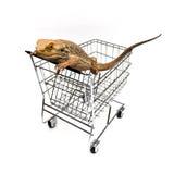 Acquisto dell'animale domestico immagini stock