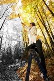 Acrílicos del otoño Imagenes de archivo