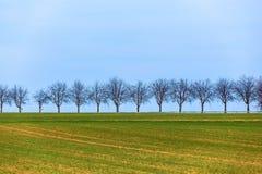 Acre met rij van bomen stock afbeelding