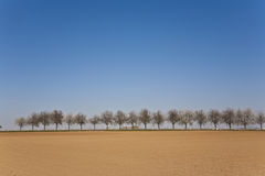 Acre recentemente ploughed com fileira das árvores Fotografia de Stock