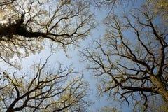 Acre recientemente arado con la fila de árboles en el horizonte Imágenes de archivo libres de regalías