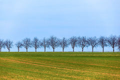 Acre with row of trees Stock Image