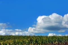 Acres de maïs image stock
