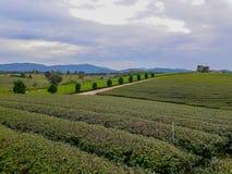 Acres de plantations de thé image stock