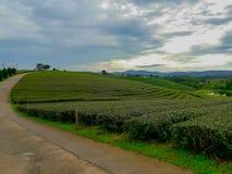 Acres de plantations de thé photos libres de droits