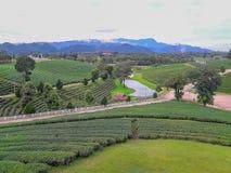Acres de plantations de thé photographie stock