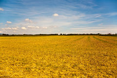 Acres after harvest are looking golden in the sun Stock Photography