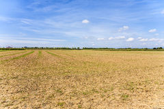 Acres after harvest under blue sky Royalty Free Stock Image