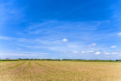 Acres after harvest under blue sky Royalty Free Stock Photography
