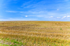 Acres after harvest under blue sky Royalty Free Stock Photos