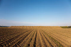 Acres with sugar beets Stock Image