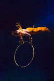 Acrobat in action in a circus Royalty Free Stock Photos