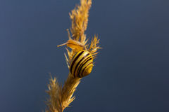Acrobat. Snail on the field. Macro photography of wildlife Stock Photo