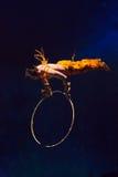 Acrobate dans l'action dans un cirque Photos libres de droits