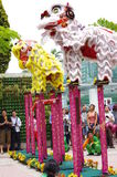 Acrobatic Lion dance Royalty Free Stock Photo
