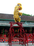 Acrobatic lion dance Royalty Free Stock Images