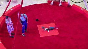 Acrobatic performance in a red ring TX stock video footage
