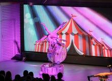 Acrobatics on stage. Stock Images
