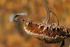 Acrobatische Doorgenaaide Mees royalty-vrije stock afbeelding